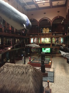Bishop Museum in Honolulu, Hawaii